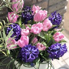 ムスカリ/ヒヤシンス/チューリップ/ガーデニング/花のある暮らし/ガーデン雑貨/... こんばんは☆*:.。.⭐︎  今日は風も…(2枚目)
