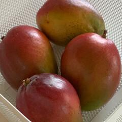 マンゴー/おすすめアイテム/令和の一枚/フォロー大歓迎/至福のひととき/おやつタイム/... 大好きなマンゴー様🥭  いただきまーす🥭
