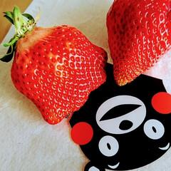 イチゴ 可愛い形のイチゴ発見🍓✨  平べったい鈴…