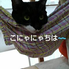 猫の気持ち/にゃんこ日めくり こにゃにゃちは〰️ 6月16日 火曜日 …