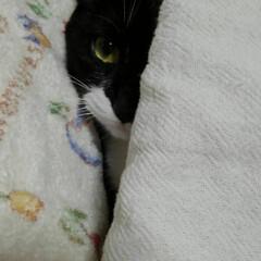 猫のいる生活/白黒猫 片目で早く寝ようと催促する紗夢 「お母さ…