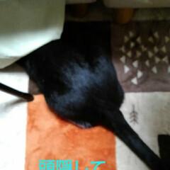 白黒猫/猫/フォロー大歓迎/LIMIAペット同好会/にゃんこ同好会/うちの子ベストショット 頭がソファーのしたに❗ 何をしているのか…