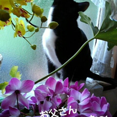 白黒猫/にゃんこ同好会 いたずら紗夢