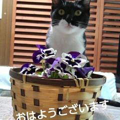 花のある生活/猫のいる生活/にゃんこ日めくり おはようございます 5月13日 水曜日で…