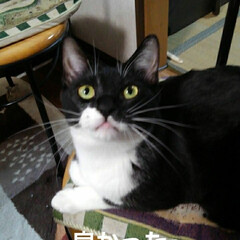 猫の気持ち/猫のいる生活/白黒猫 私が具合の悪いときに 紗夢が心配そうに見…(7枚目)