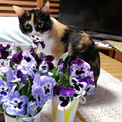 三毛猫/猫と花/花のある生活 昨日はお庭の草取りをしました  玄関先で…