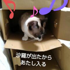 猫のいる生活/にゃんこ同好会/ねこ お父さんが同じような箱を 重ねて置いたら…(4枚目)