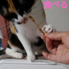 ねこ/猫のいる暮らし/にゃんこ同好会 昨日の夕食に 昼間に採った土筆を頂く前に…(6枚目)