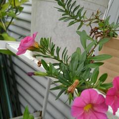 庭の夏の花/フォロー大歓迎/夏のお気に入り/写真/夏の花 庭に咲いている夏の花達(2枚目)