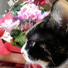 花のある暮らし/にゃんこ同好会 昨日は娘達から時間差攻撃で お花が届きま…(2枚目)