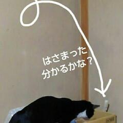 猫の気持ち/にゃんこ同好会/にゃんこ日めくり/ダイソー/梅雨/梅雨対策/... おはようございます 7月5日 日曜日です…(4枚目)