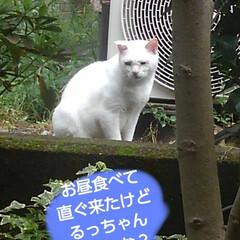 リミアペット同好会/猫/シャム/フォロー大歓迎 すれ違いに待っていた 可愛いカップルの待…(1枚目)