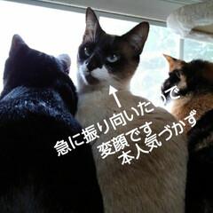 にゃんこ同好会/にゃんこ日めくり/三姉弟猫 おはようございます🐱 雨降りの日曜日 3…