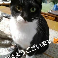 白黒猫/にゃんこ同好会/にゃんこ日めくり おはようございます🐱 今日は1月21日 …