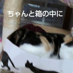 猫のいる生活 昨日の事 三匹が交代で箱入りさんしてました(4枚目)