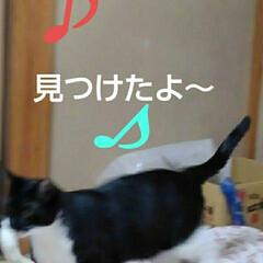 猫の気持ち/にゃんこ同好会/にゃんこ日めくり/ダイソー/梅雨/梅雨対策/... おはようございます 7月5日 日曜日です…(5枚目)