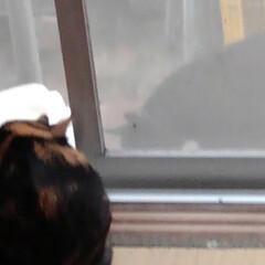 猫のいる生活 網戸越しに可愛い事してました あら、いけ…(5枚目)