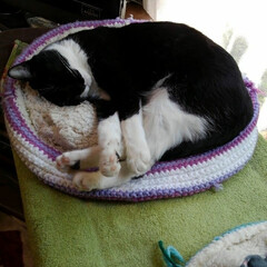 猫のいる暮らし ご挨拶が終わったらあったかベッドで休憩