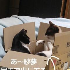 猫のいる生活/にゃんこ同好会/ねこ 箱入り息子と箱入り娘が喧嘩して 仲直りし…(5枚目)