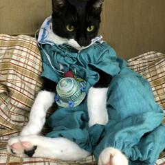 ハンドメイド/猫/白黒猫/フォロー大歓迎/LIMIA手作りし隊/LIMIAおでかけ部/... 紗夢がお出かけ前の身だしなみに頭を悩ませ…