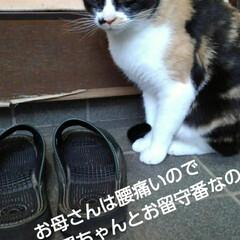 三毛猫/猫のいる生活/にゃんこ同好会/にゃんこ日めくり おはようございます 今日は良い天気です …(3枚目)