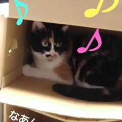 猫のいる生活/にゃんこ同好会/ねこ お父さんが同じような箱を 重ねて置いたら…(2枚目)