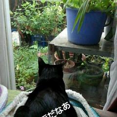 猫のいる生活/にゃんこ同好会/にゃんこ日めくり/猫の気持ち おはようございます ものすごいどしゃ降り…