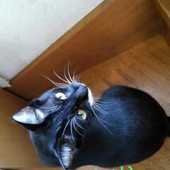 白黒猫/フォロー大歓迎 紗夢のお見送り