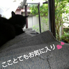 猫のいる暮らし/にゃんこ同好会/にゃんこ日めくり おはようございます🐱 今日は曇り空  5…(2枚目)