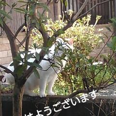 にゃんこ同好会/にゃんこ日めくり おはようございます🙀 3月26日 木曜日…
