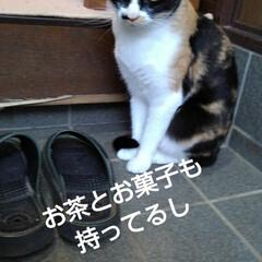 三毛猫/猫のいる生活/にゃんこ同好会/にゃんこ日めくり おはようございます 今日は良い天気です …(6枚目)
