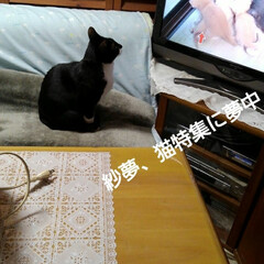 猫のいる暮らし/三姉弟猫/にゃんこ同好会 昨日の夜、猫特集やっていたのを にゃんこ…