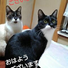 猫の気持ち/猫のいる生活/にゃんこ同好会/にゃんこ日めくり おはようございます とっても良い天気の朝…