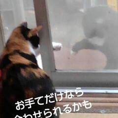 猫のいる生活 網戸越しに可愛い事してました あら、いけ…(4枚目)