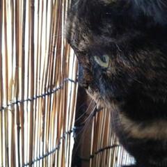 猫の気持ち/猫のいる暮らし/にゃんこ同好会 ビビ、小町ちゃんの気晴らし場所   以前…