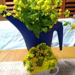 春 昨日の収穫の中に 嬉しい物があったの 菜…(1枚目)