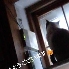 にゃんこ同好会/にゃんこ日めくり/三姉弟猫 おはようございます🐱 今日もすこぶるいい…