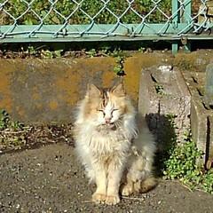 カラス/野良猫 野良猫さんとカラス