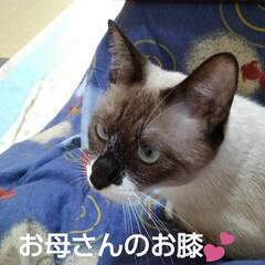 猫のいる生活/にゃんこ同好会 寒いのでこたつを出しました エアコンをつ…