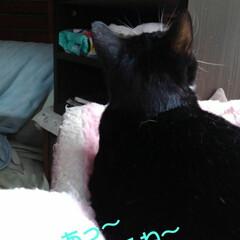 猫のいる生活/ねこ/にゃんこ日めくり 4月25日 日曜日だにゃん  僕と沙羅ち…(2枚目)