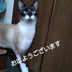 猫のいる生活/猫の気持ち/にゃんこ日めくり おはようございます 5月9日 土曜日です…