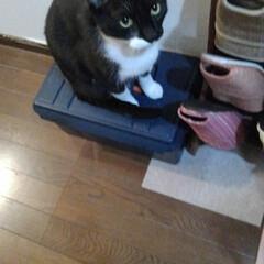 おみやげ/白黒猫/猫/フォロー大歓迎 午後のお見送りは紗夢が来ました 瑠月と同…