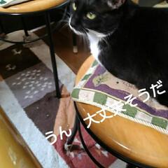 猫の気持ち/猫のいる生活/白黒猫 私が具合の悪いときに 紗夢が心配そうに見…(8枚目)