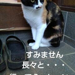 三毛猫/猫のいる生活/にゃんこ同好会/にゃんこ日めくり おはようございます 今日は良い天気です …(8枚目)