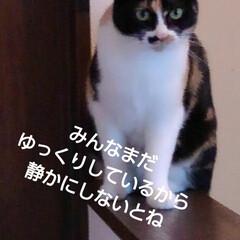ご挨拶/三毛猫 おはようございます 今日も良い天気の日曜…