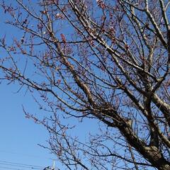 花のある暮らし/春 畑にも春が来ましたよ~🌸🌸🌸 (お花連投…(6枚目)