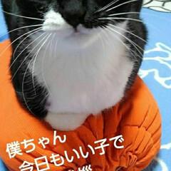 見張り隊/白黒猫/にゃんこ日めくり/フォロー大歓迎/にゃんこ同好会 おはようございます🐱 今日は1月27日 …(2枚目)
