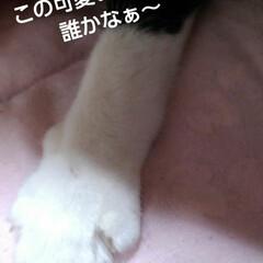 リミアペット同好会/白黒猫/リミアの冬暮らし/フォロー大歓迎 お寝坊の僕ちゃんの手(1枚目)