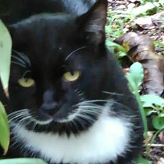 猫のいる暮らし/にゃんこ同好会/猫 台風の影響で涼しい朝でした 庭でくつろい…