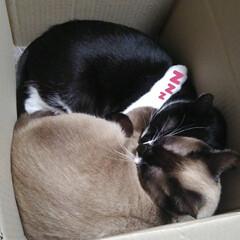 猫のいる生活/にゃんこ同好会/ねこ 箱入り息子と箱入り娘が喧嘩して 仲直りし…(10枚目)